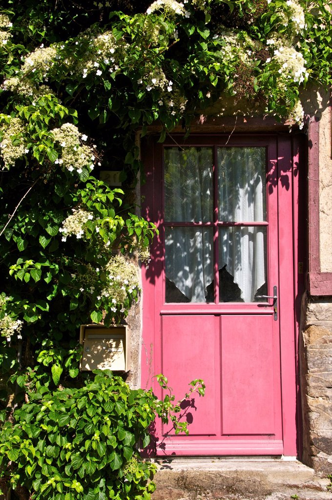 Stock Photo: 1566-1171598 Pink wooden door,with white creeper plant, Dinan, Cotes d´Armor 22, Brittany, France