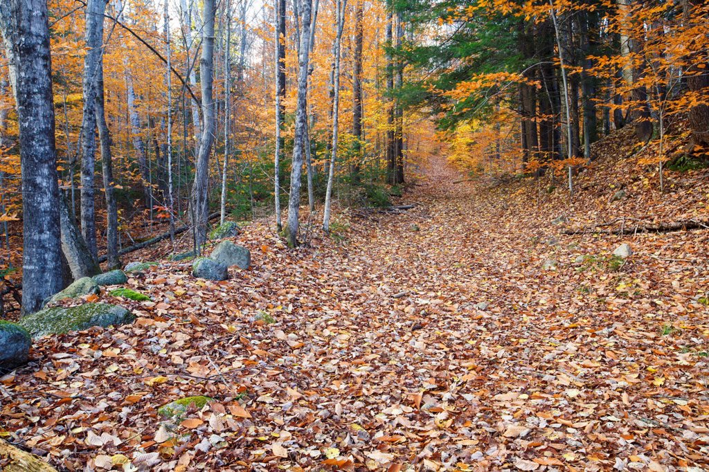 Remnants of the Thornton Gore hill farm community in Thornton, New Hampshire USA  This is the Thornton Gore Road that traveled through the farm community  This farming community was abandoned in the 19th century : Stock Photo