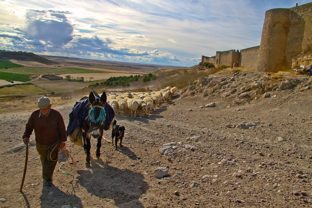 Stock Photo: 1566-1177531 Flock sheep and Shepherd with a donkey and dogs, near castle wall Urueña, Castile and León, Spain