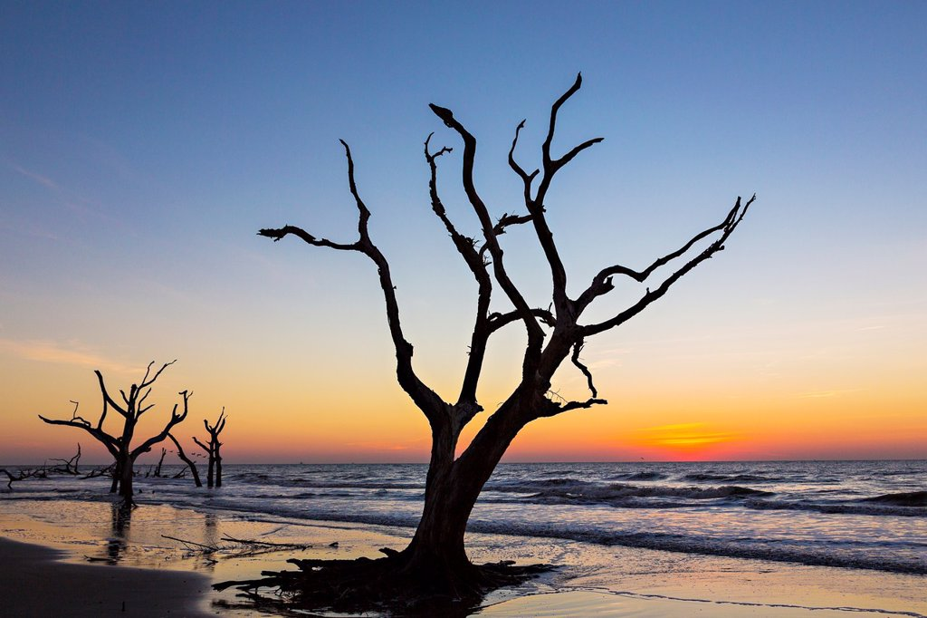 Stock Photo: 1566-1179170 Sunrise over Boneyard Beach on Bulls Island, South Carolina  Bulls Island is a Sea Island 3 miles off the mainland and part of the Cape Romain National Wildlife Refuge