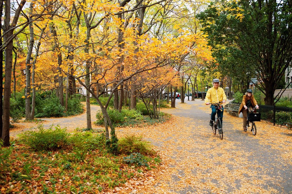 Stock Photo: 1566-1181071 Autumn leaves cover the ground in Hudson River Park near Battery Park City in New York prior to the arrival of Hurricane Sandy Battery Park City was in the Zone A evacuation area and was inundated with water