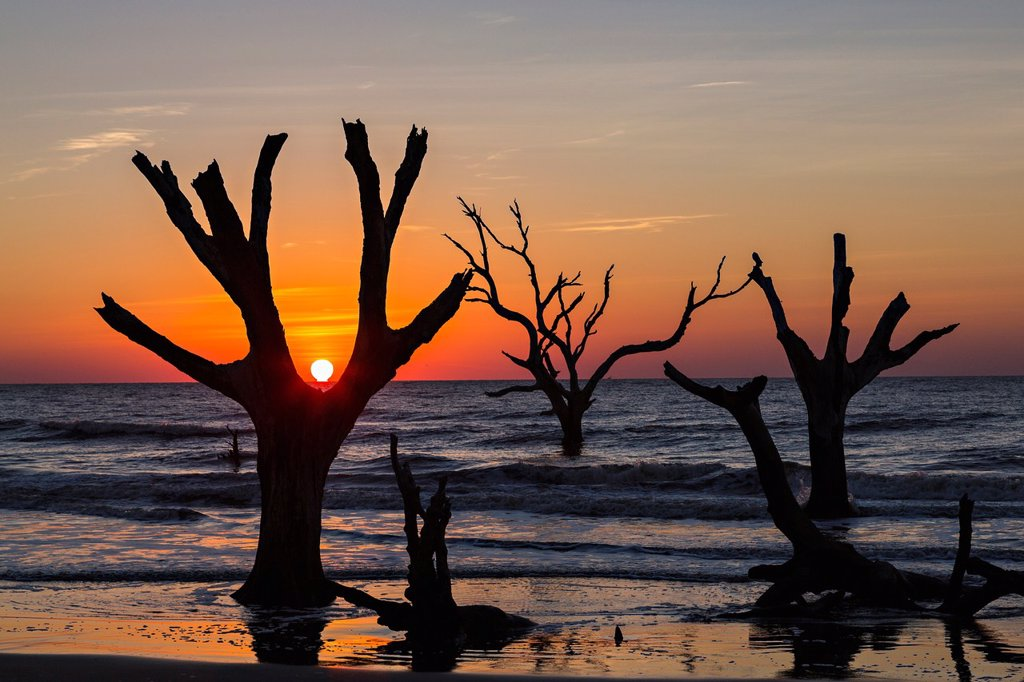 Stock Photo: 1566-1181710 Sunrise over Boneyard Beach on Bulls Island, South Carolina  Bulls Island is a Sea Island 3 miles off the mainland and part of the Cape Romain National Wildlife Refuge