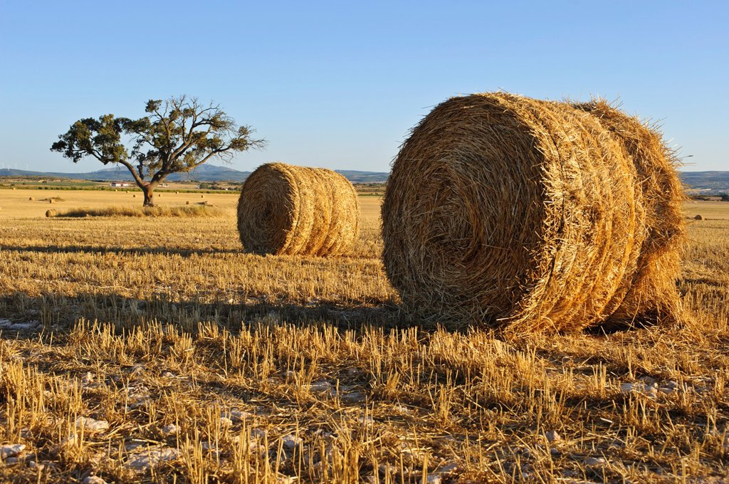Straw Bales and cereal field, Almansa Albacete. : Stock Photo