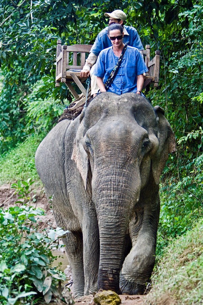 Elephant trek near Luang Prabang Laos PDR : Stock Photo