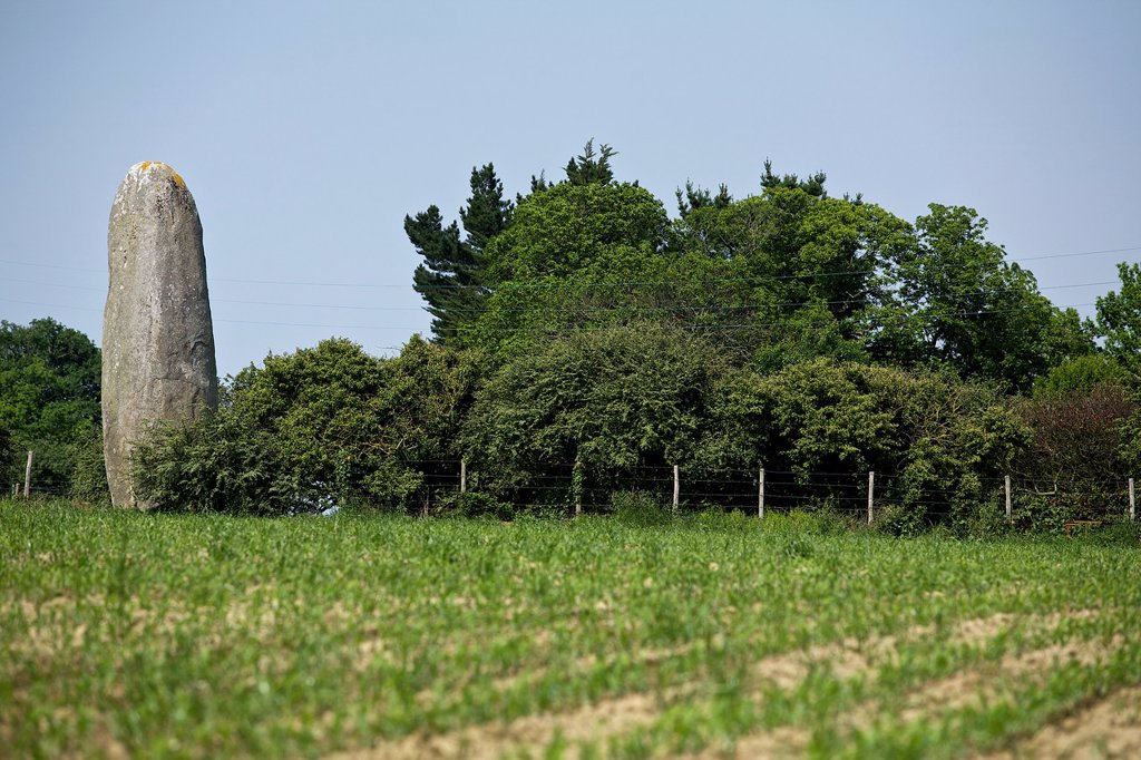 Stock Photo: 1566-1187338 menhir of the field dolent, combourg, Ille et Vilaine, Brittany, France
