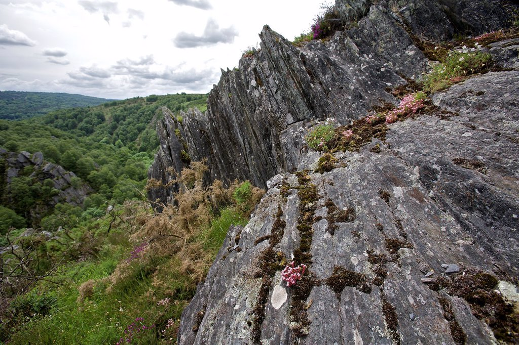 Nature on the ridges of daoulas, Cote d´Armor, Brittany, France : Stock Photo