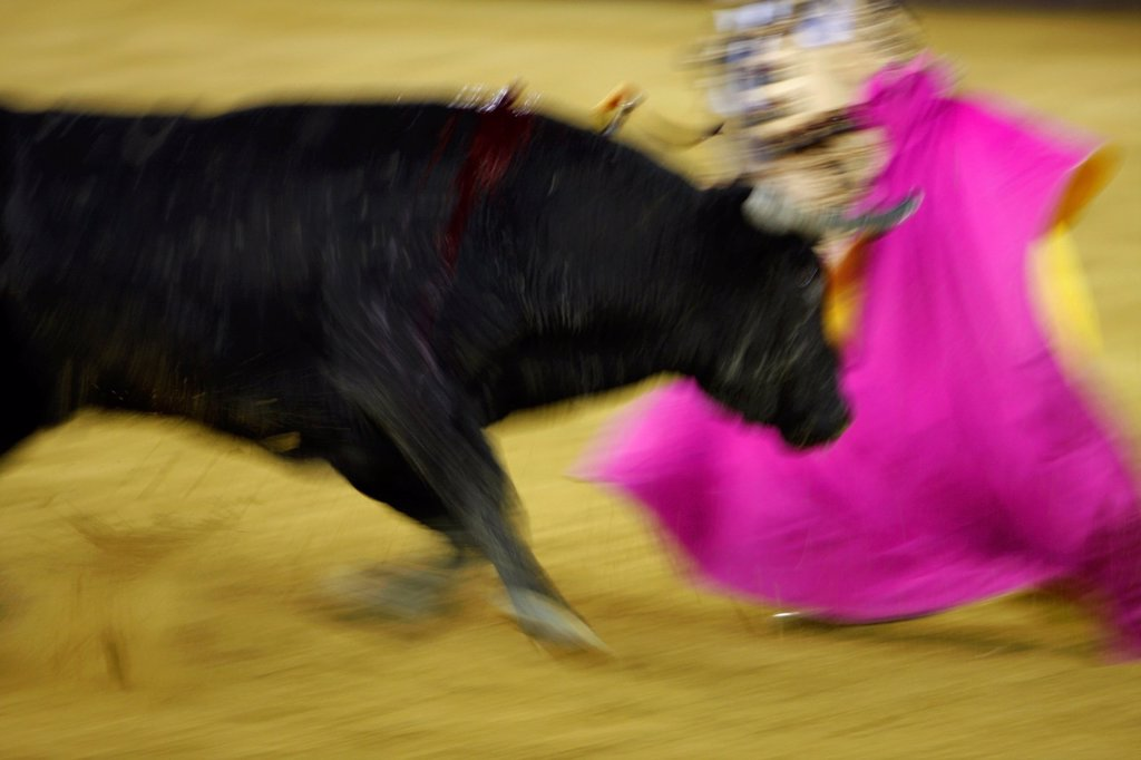 Stock Photo: 1566-1192196 Bullfighting in the bullring ´Malagueta´  Malaga, Andalusia, Spain, Europe
