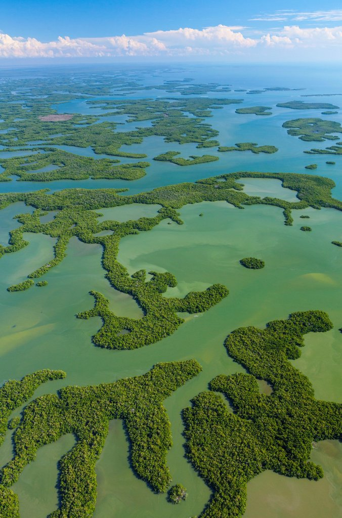 Stock Photo: 1566-1192269 Aerial view, Everglades National Park, Florida, USA.