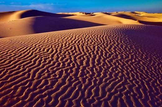 Dunes at sunset, Monahans Sandhills State Park, Chihuahuan Desert, Texas, USA : Stock Photo