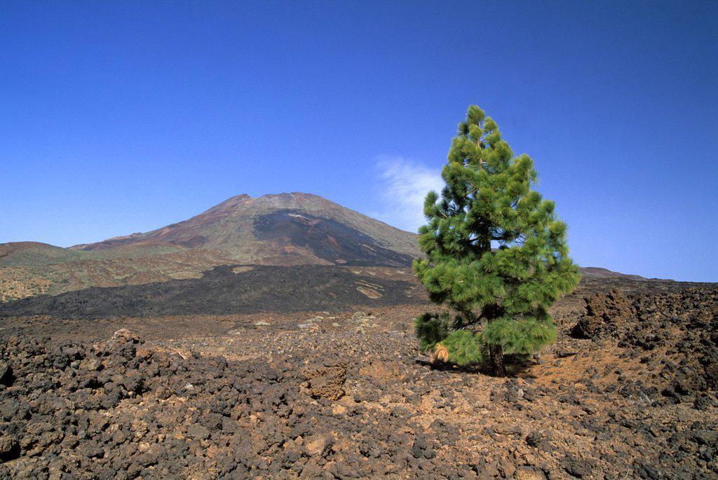 Pico Viejo, Caldeira de las Canadas, Mount Teide, National Park, Tenerife, Canary Islands, Atlantic Ocean : Stock Photo