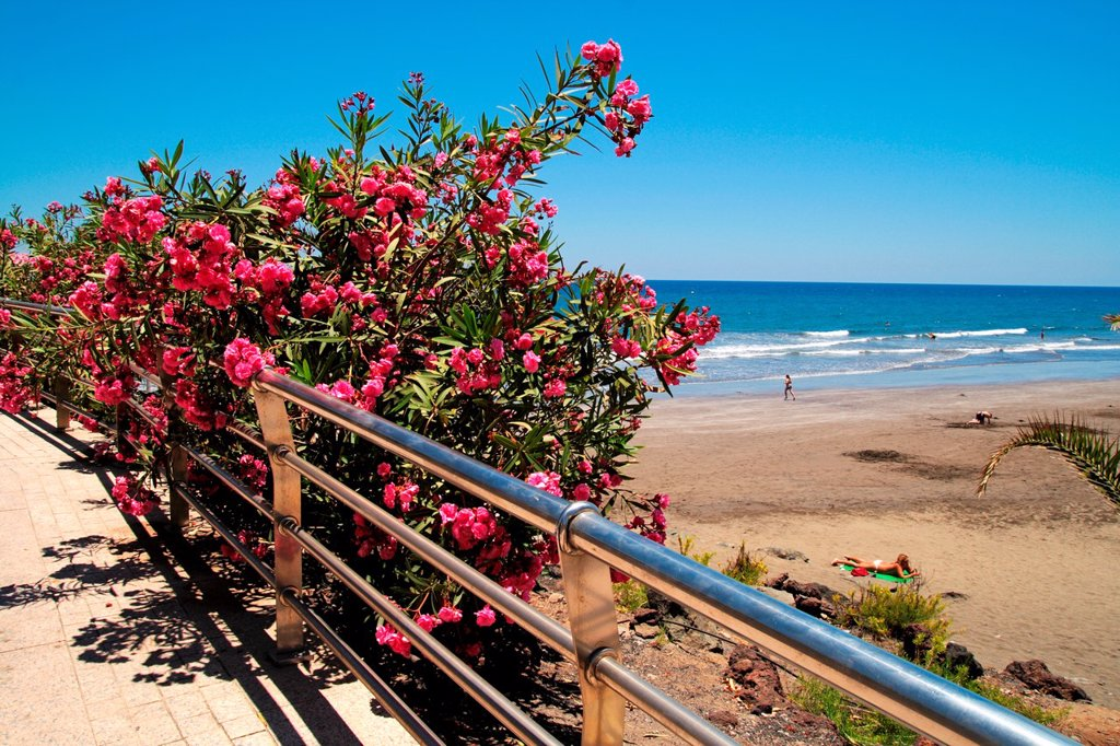 Puerto Rico beach in Gran Canaria island : Stock Photo