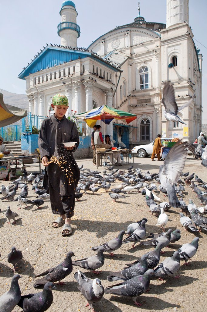 Stock Photo: 1566-1204961 Afghan boy feeding pigeons at a mosque in kabul, Afghanistan
