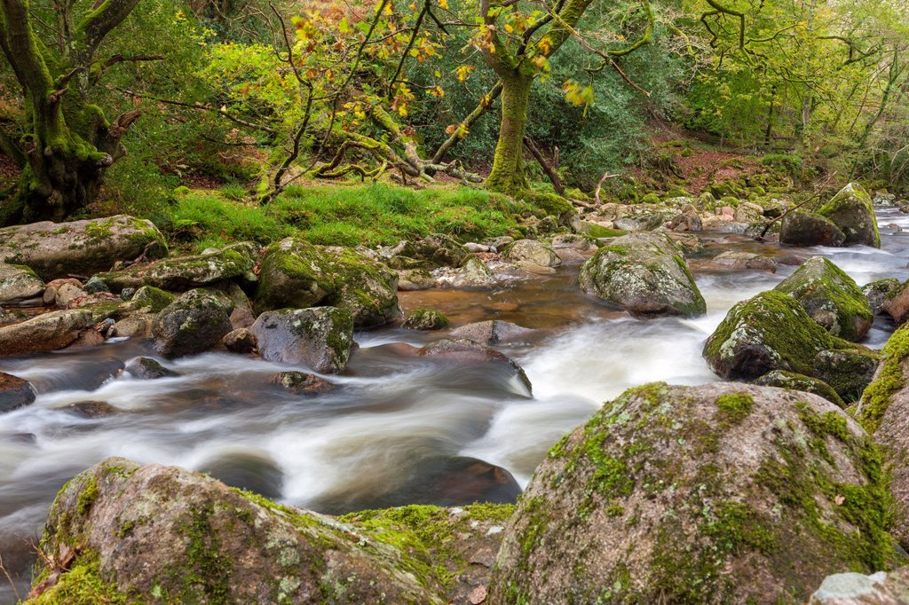 Stock Photo: 1566-1205434 Rocky River Plym near Shaugh Prior in Dartmoor National Park