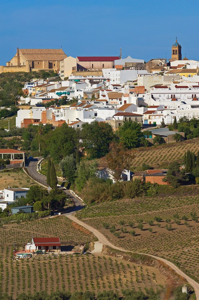 Stock Photo: 1566-1207591 Montilla, Cordoba province, Montilla-Moriles area, , Andalusia, Spain