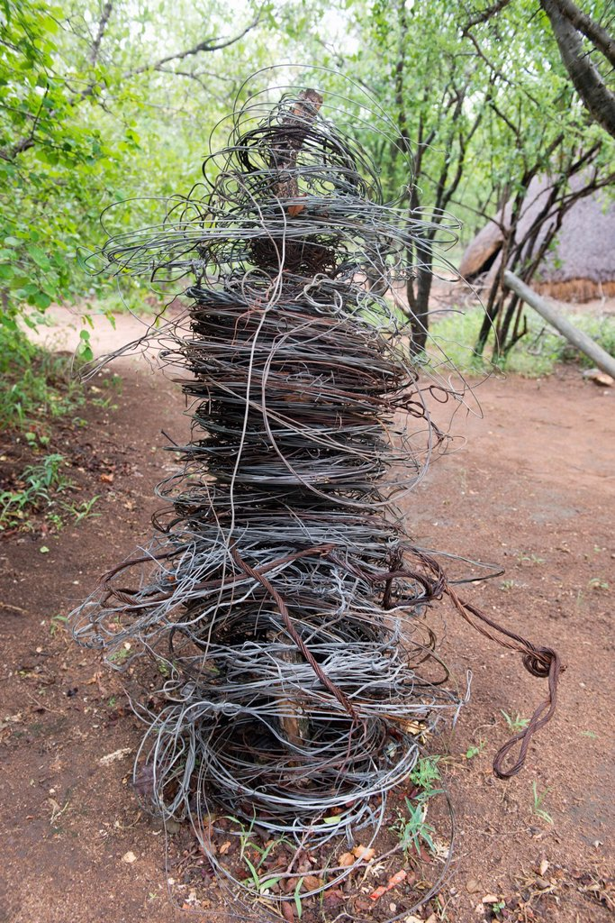 Stock Photo: 1566-1207962 Wire snares collected from the South African bush veldt and inside game reserves  These snares will indiscriminately catch animals from Antelope, giraffe and rhino  Each poacher has a signature method of construction especially in the fastening knot of th. Wire snares collected from the South African bush veldt and inside game reserves  These snares will indiscriminately catch animals from Antelope, giraffe and rhino  Each poacher has a signature method of construction especially in the fastenin