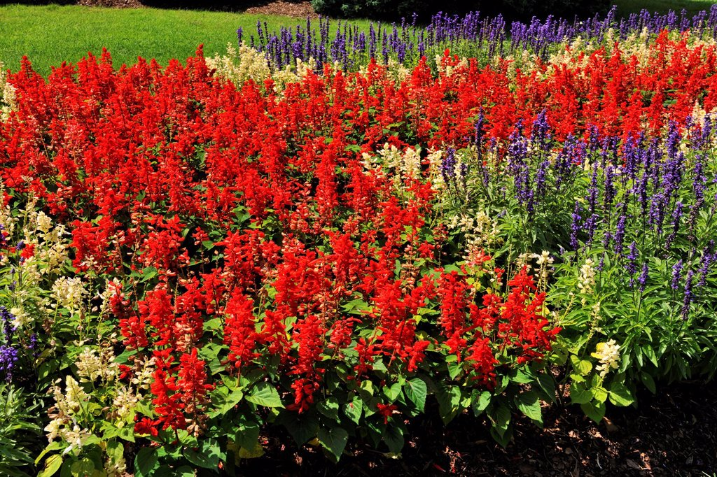 Stock Photo: 1566-1208596 Flower beds in the Niagara Botanical Garden- Rose Garden area