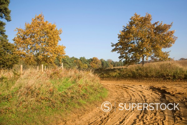 Stock Photo: 1566-1209132 Sandy heathland track road path on Sandlings, Sutton heath, Suffolk, England