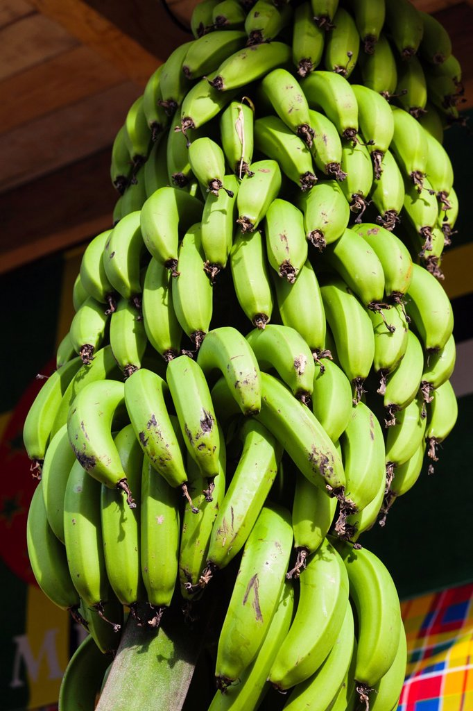 Stock Photo: 1566-1209508 Dominica, Roseau, tropical vegetation, bananas