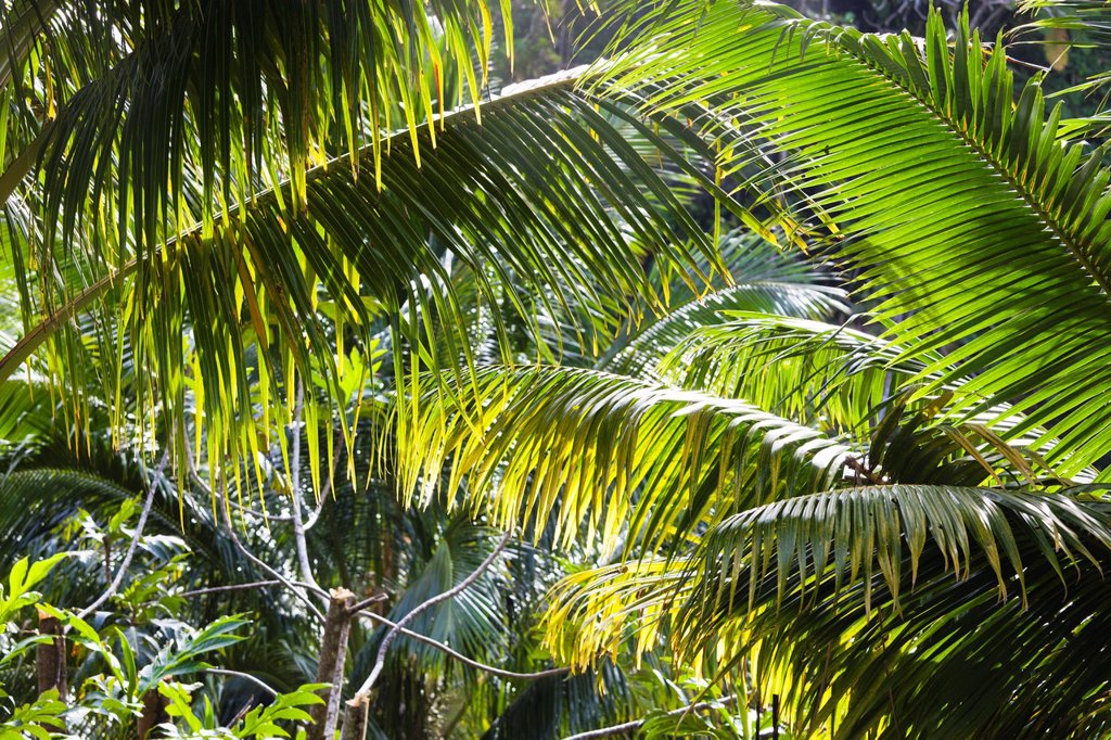 Stock Photo: 1566-1209509 Dominica, Roseau, Roseau Valley, tropical vegetation, rain forest
