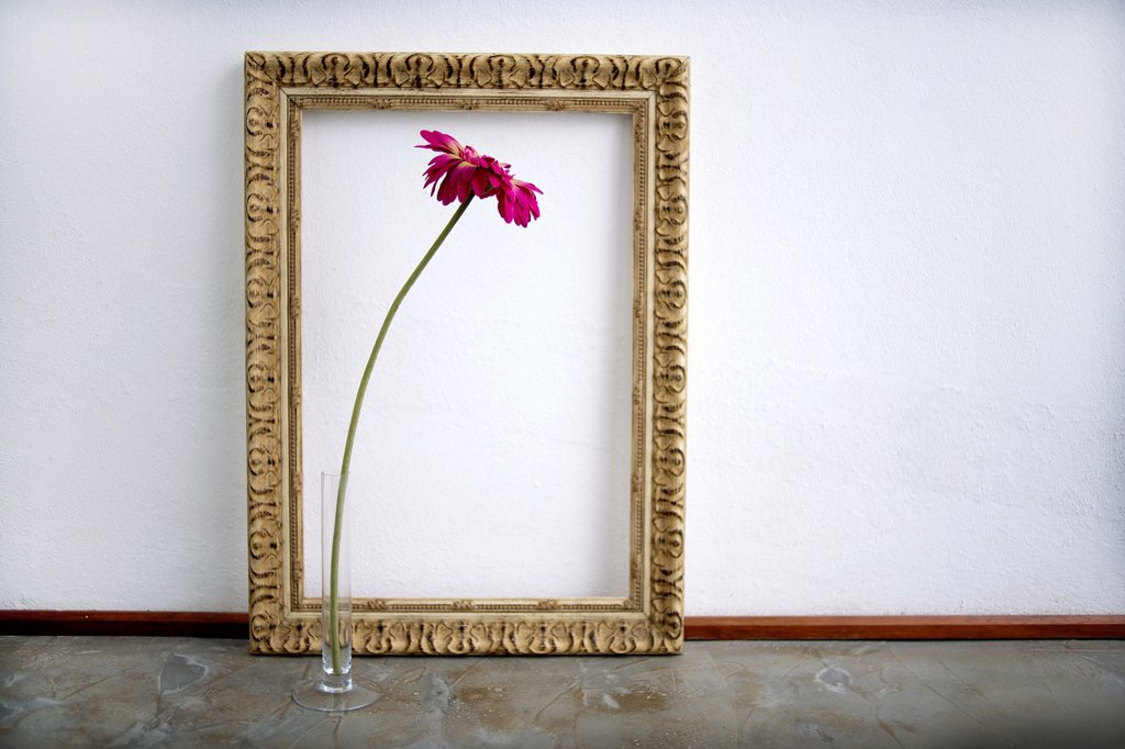 Stock Photo: 1566-1212499 marco dorado con flor, golden frame with flower,