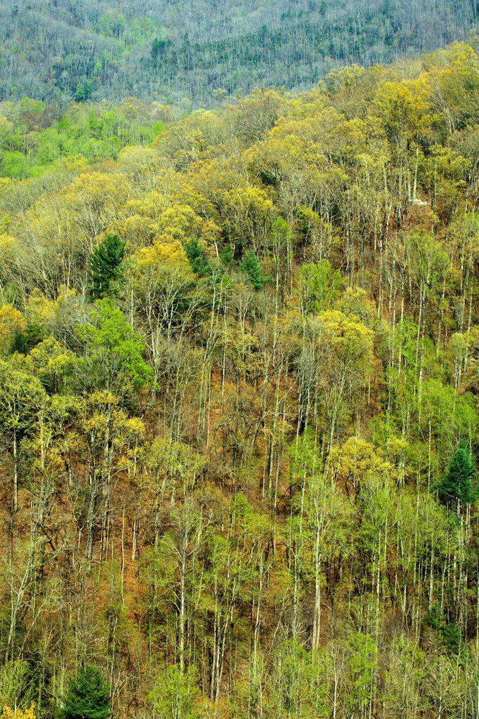 Stock Photo: 1566-1212537 Spring Images, Blue Ridge Parkway, North Carolina