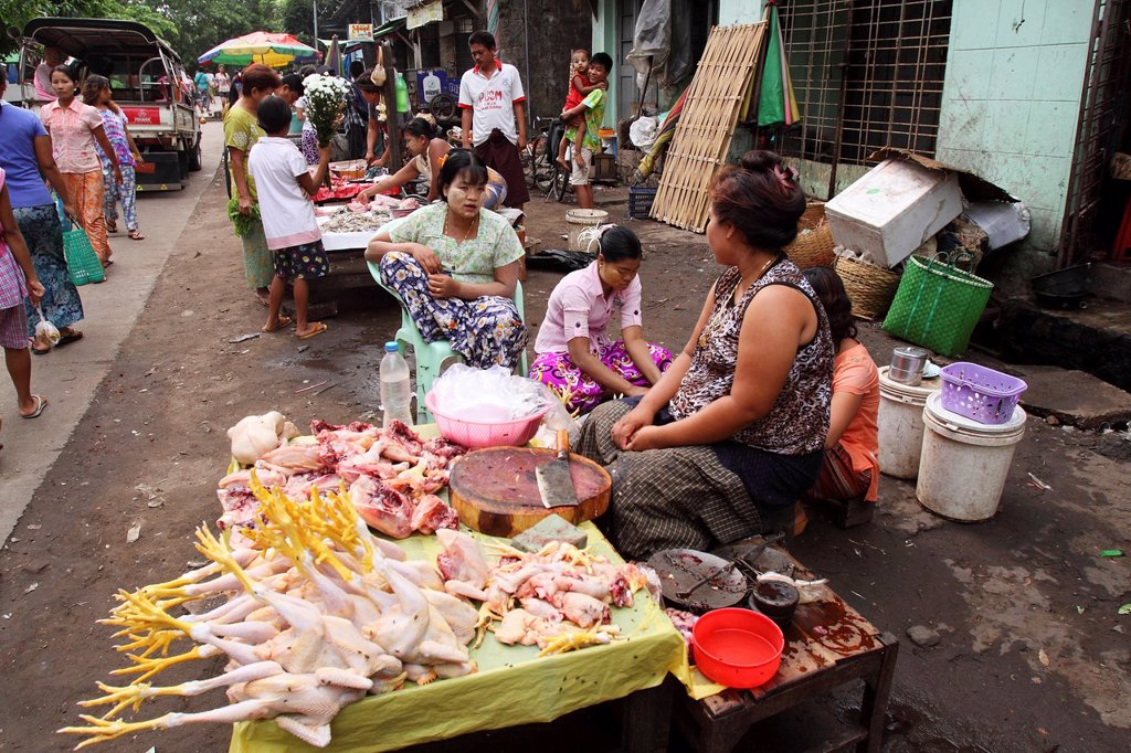 Burma women Selling chicken at Local Market, yangon, myanmar : Stock Photo