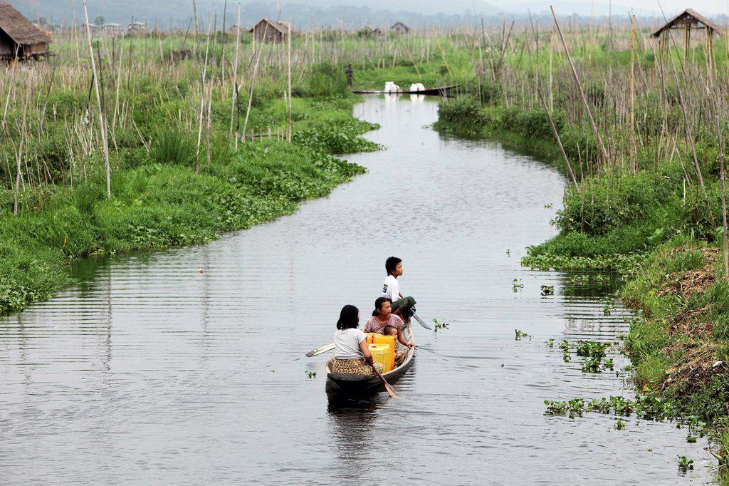Stock Photo: 1566-1213284 Floating gardens, Inle Lake, Shan states, Burma