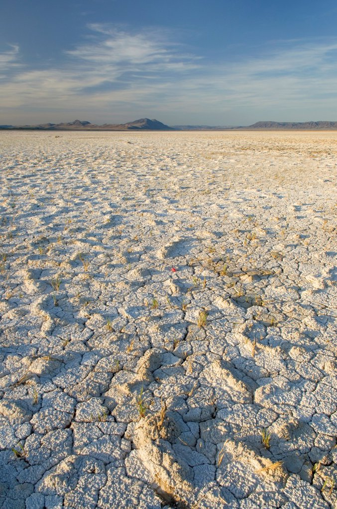 Cracked mud and mineral desposits on dry lakebed, Alvord Desert Oregon : Stock Photo