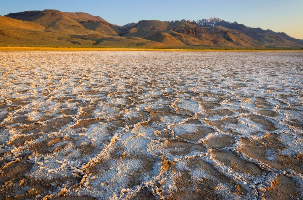 Cracked mud and mineral desposits on dry lakebed, Steens Mountain in the distance, Alvord Desert Oregon : Stock Photo