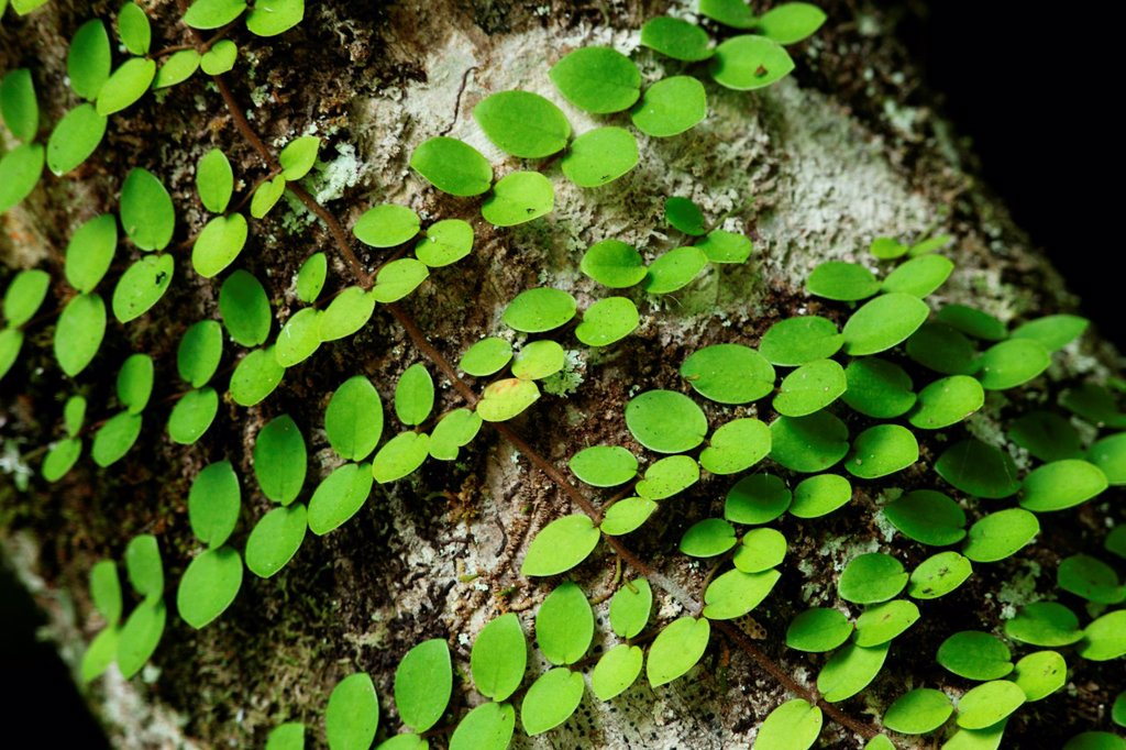 Stock Photo: 1566-1214813 Plant in the nature, borneo