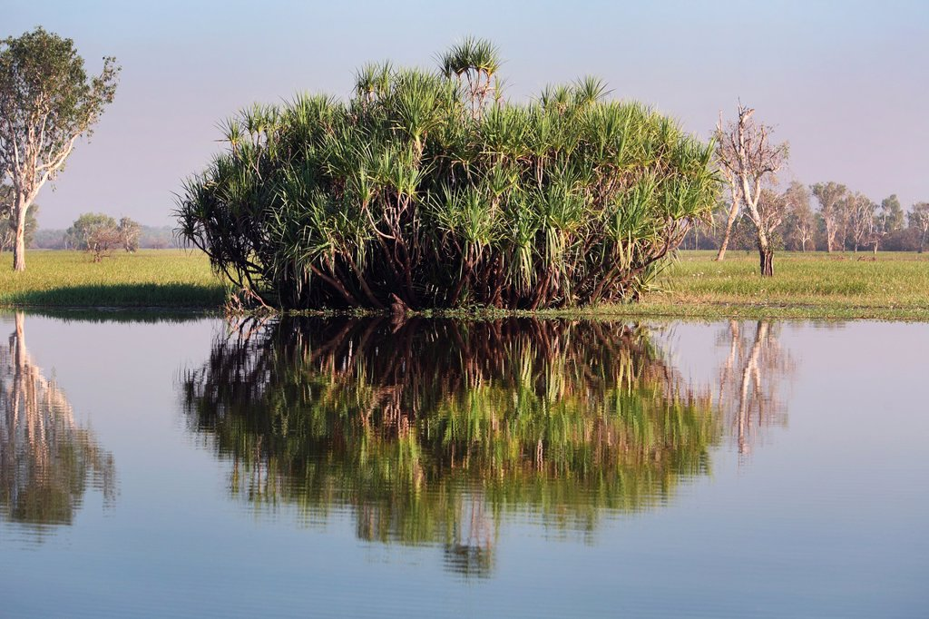 Stock Photo: 1566-1215486 Yellow Water Billabong in Kakadu National Park  Northern Territory, Australia
