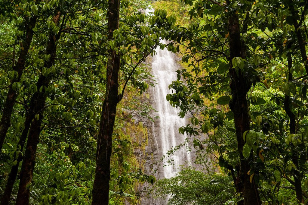 USA, Hawaii, Oahu  The 100 ft waterfall at the top of the Manoa Falls trail : Stock Photo