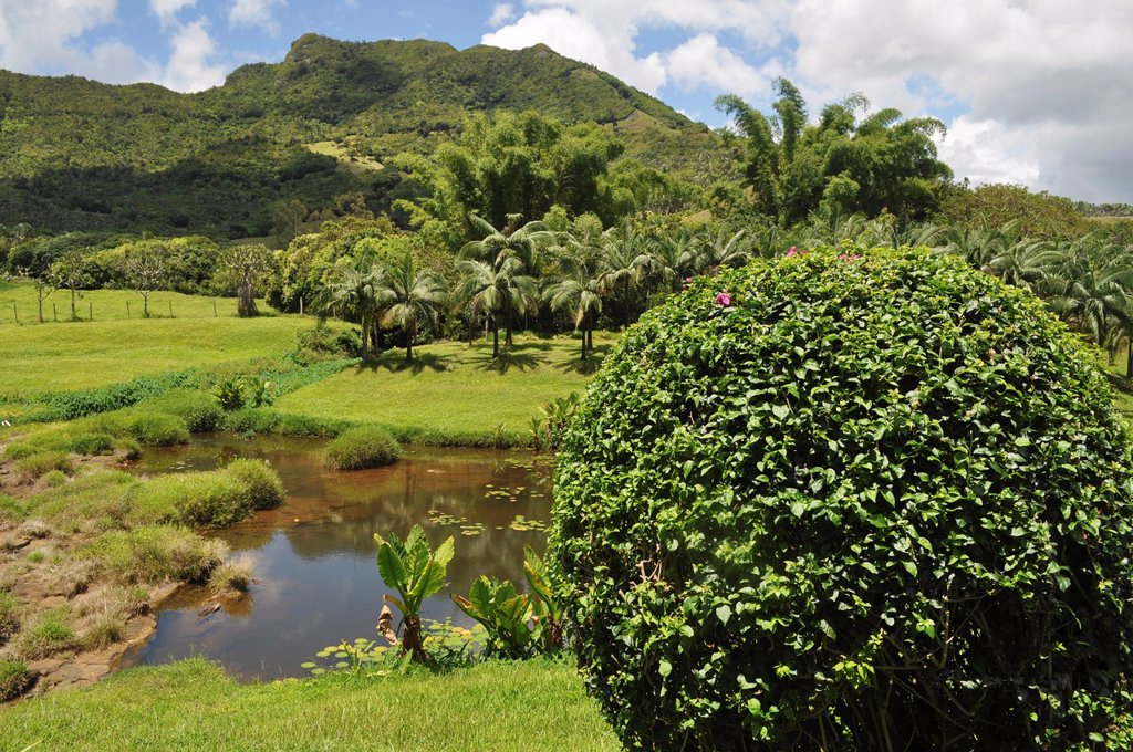 Stock Photo: 1566-1216434 Mauritius, La Vallée de Ferney natural reserve