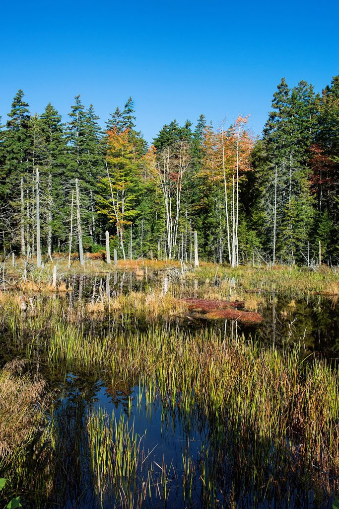 Marsh scenic, Acadia National Park, Maine, USA : Stock Photo