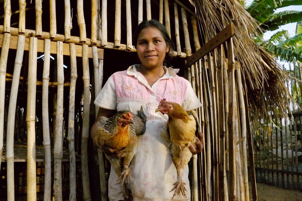 CAMBODIA photography by Sean Sprague  Projects of Caritas Cambodia, funded by SCIAF   Chas Srack 27, a beneficiary with chickens and pigs  She has two children and is pregnant  She is blind in one eye  Her chicken enclosure and holding chickens : Stock Photo