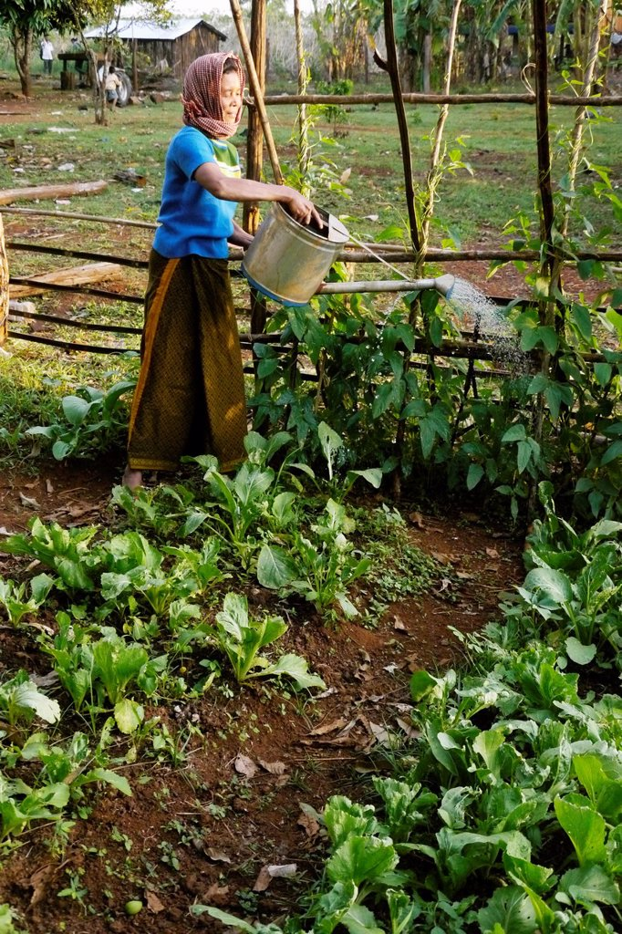 Stock Photo: 1566-1222277 CAMBODIA photography by Sean Sprague  Projects of Caritas Cambodia, funded by SCIAF   Mrs Ngeay Saveen 50, widow with three children  Watering her garden