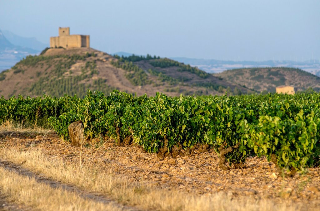 Stock Photo: 1566-1223173 Vineyards of La Rioja, Spain