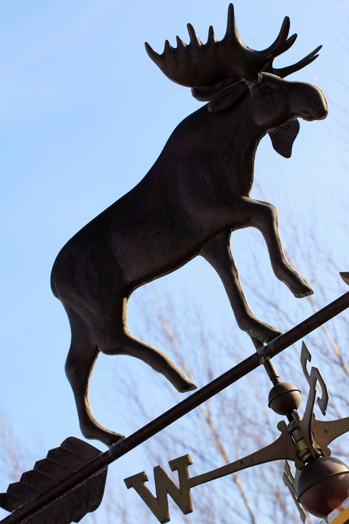Stock Photo: 1566-1225999 a moose weathervane in maine usa