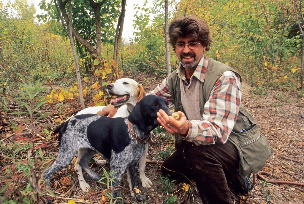 Stock Photo: 1566-1227878 truffle picking with dogs, La Casa del Trifulau, Costigliole d´Asti, province of Asti, Piedmont region, Italy, Europe
