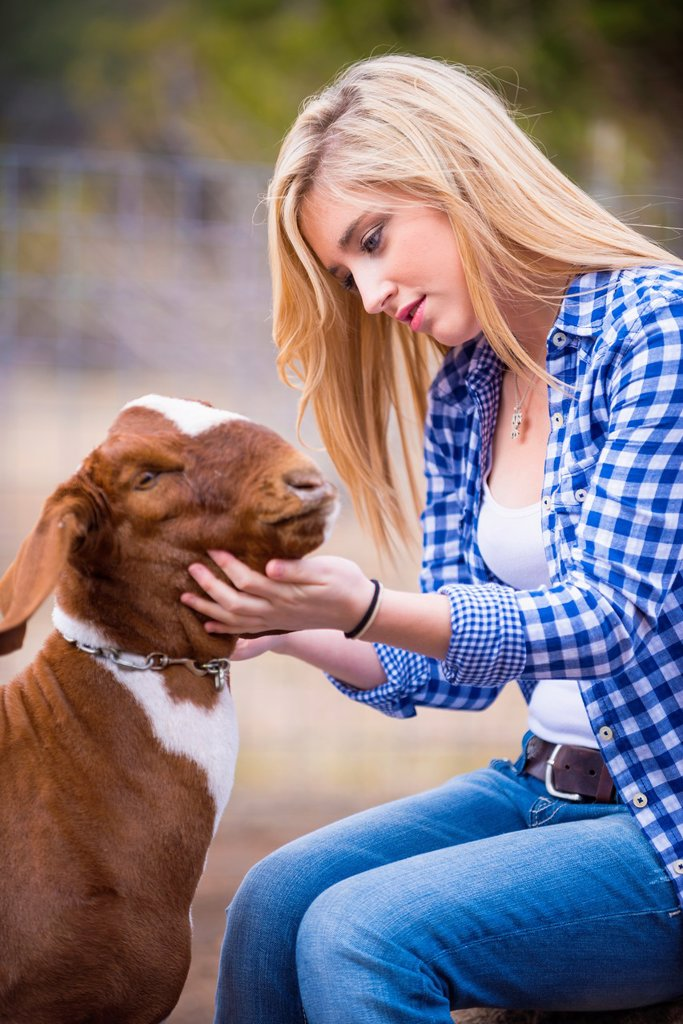 Female teenager petting a goat on a livestock farm in Texas. : Stock Photo