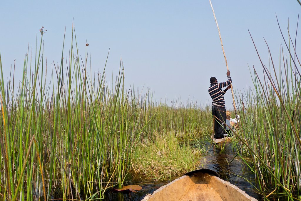 Stock Photo: 1566-1236880 Mokoro, Dugout canoes, Traditional boat, Okavango Delta, Botswana, Africa