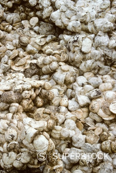 Stock Photo: 1566-1248278 Ivory Coast, Cote d´Ivoire  Rubber Plantation  Coagulated Latex Awaits Factory Processing
