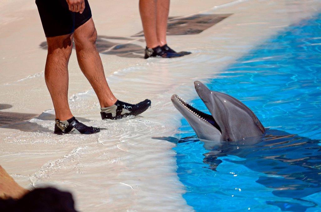 Dolphin show at Loro Parque, popular theme park in Puerto de la Cruz, Tenerife. : Stock Photo
