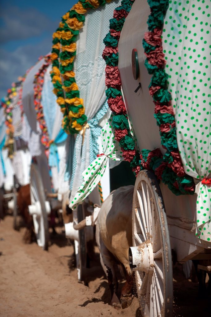 Stock Photo: 1566-1353072 Oxcarts of the Triana Brotherhood arrive to El Rocio smalll village, in Almonte, Donana National Park, Huelva province, Andalusia, Spain, May 18, 2013. Millions of pilgrims travel every year from all over of Spain and Europe to the Hermitage of El Rocí­o, located in the countryside of Almonte, Huelva inside the Doñana National Park natural reserve in Andalusia. The pilgrimage coincides with the ´´whitsun, ´´ which commemorates the descent of the Holy Spirit upon Christ´s disciples.