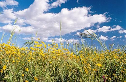 Stock Photo: 1566-247113 Flowers near Almansa. Albacete province, Castilla-La Mancha. Spain