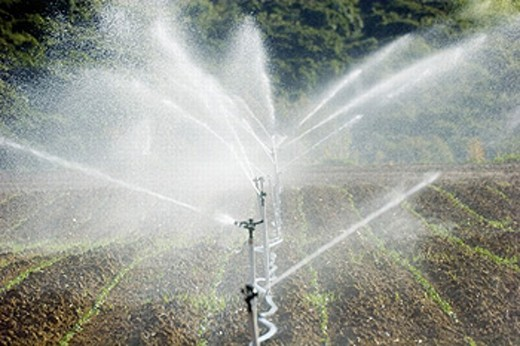 Sprays watering field : Stock Photo