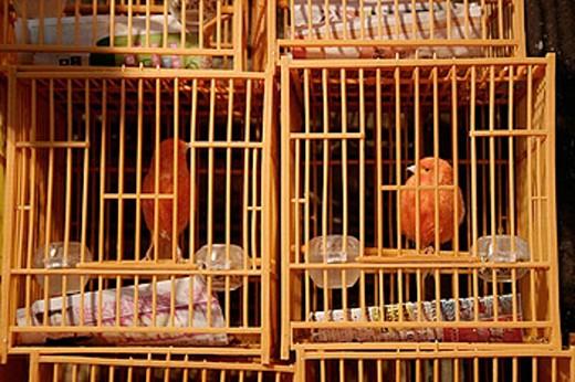 Bird garden in Mong Kok. Mong Kok Nr. Yuen Po St. Hong Kong. Kowloon Peninsula. : Stock Photo