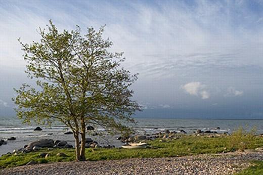 Stone beach on Baltic coast, Saaremaa island. Estonia : Stock Photo
