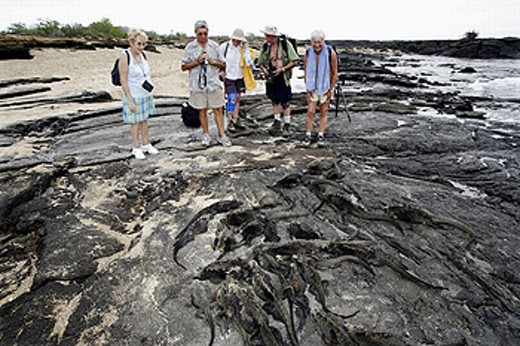 Stock Photo: 1566-259731 Tourists and Marine Iguana (Amblyrhynchus cristatus). Santiago island, Galapagos Islands. Ecuador