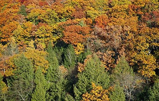 Fall foliage along the Connecticutt River near Turners Falls, Massachusetts. USA : Stock Photo